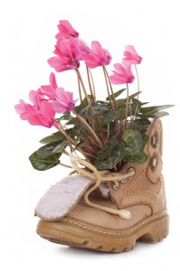Flowers in old boot